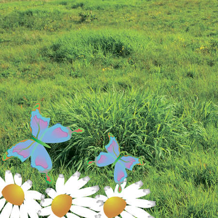 illustrated butterfly on the lawn Stock Photo - 10603565