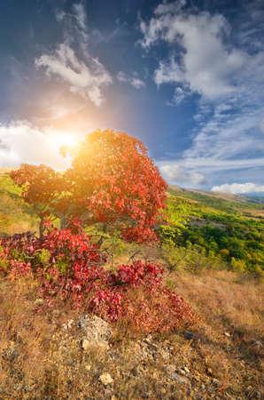 colorful autumn trees. mountain landscape photo
