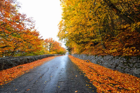 Autumn forest road in the woods photo