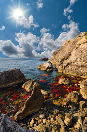 red algae on the rocks in the sea photo