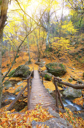 ransition bridge across the river in the autumn forest.