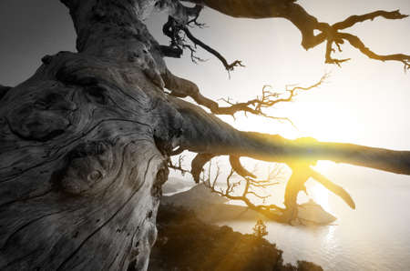 perennial: perennial tree in the background seascape. rising sun Stock Photo