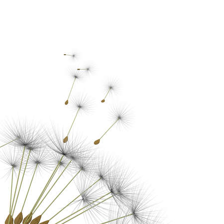 dandelion wind: dandelion parachute on a white background
