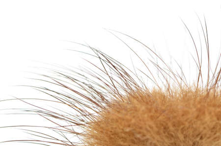 insulate: portion of fluffy fur with hairs on a white background