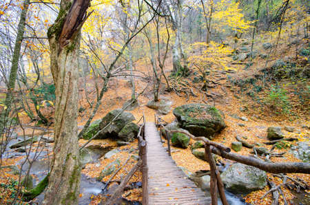 ransition bridge across the river in the autumn forest. photo