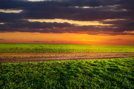 dirt road runs along the field with green grass at sunset Stock Photo - 13192671