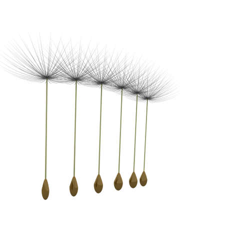 fluff: dandelion parachute on a white background