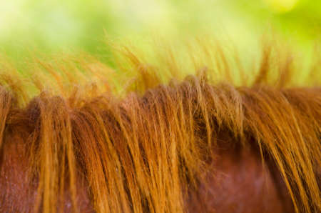 sinlight: mane of a horse on nature background Stock Photo