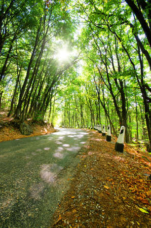 mountain road runs along the autumn forest photo