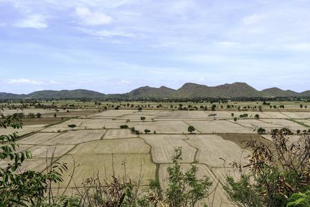 barren: Paddy fields barren and empty