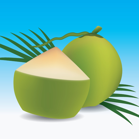 recently: Young green coconut, Vector illustration, Eps 10 Illustration