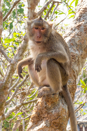 misbehave: Long-tailed macaque monkey Stock Photo