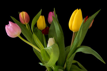 Bouquet of tulips in different colors isolated on a black background