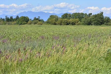 晴れた日に草のフィールドです。 写真素材 - 32575911