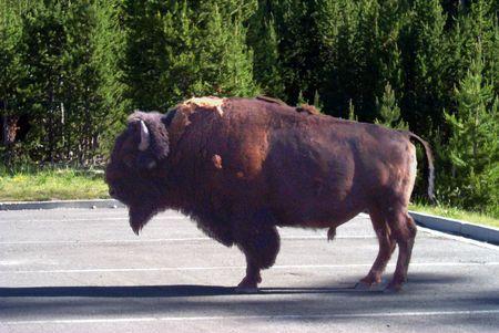 Yosemiti National Park resident taking a break parked Imagens
