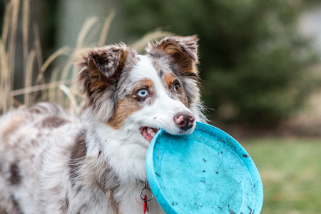 frisbee: Dog and her frisbee