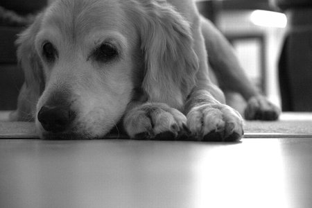 dog days: D�a De Perros Foto de archivo