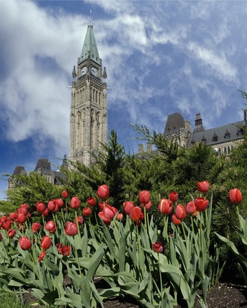 The clock tower of the canadian parlement photo