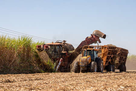 Sugarcane harvest - harvester activating in sugarcane plantation - sugar and ethanol industry Imagens