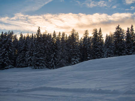 treeline: Mountain forest in the evening ,Engadine, Switzerland