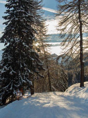 skipiste: Eine Skipiste in der Sonne von einem sp�ten Nachmittag im Engadin, Schweiz