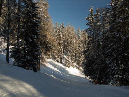 skipiste: Schnelle Ski durch einen sch�nen Winterwald, Engadin, Schweiz laufen