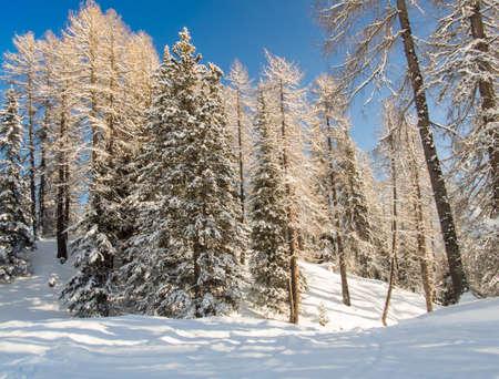 skipiste: Ski durch den Wald laufen, Engadin, Schweiz