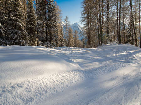 deep powder snow: On a walk downhill in the Engadine, Switzerland