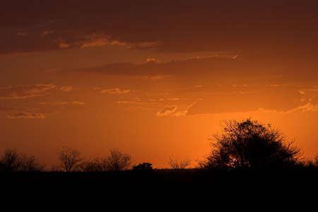 sensing: African sunset