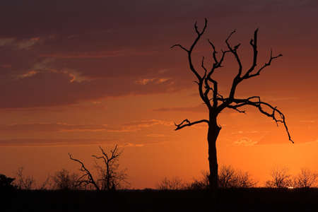 Romantic sunset in Africa Stock Photo - 513464