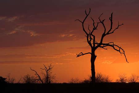Romantic sunset in Africa Stock Photo - 513464