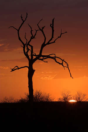 Sunset as only Africa can provide Stock Photo - 513468