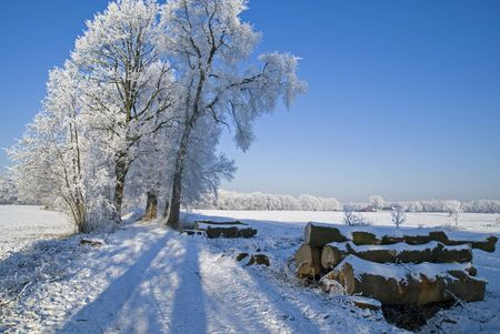 Some trees in winter landscape photo