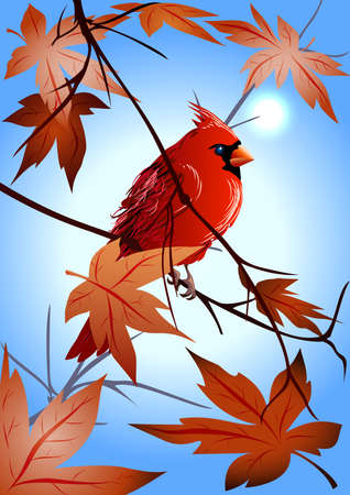 the  northern cardinal sitting on a maple branch early in the morning Stock Vector - 16317545