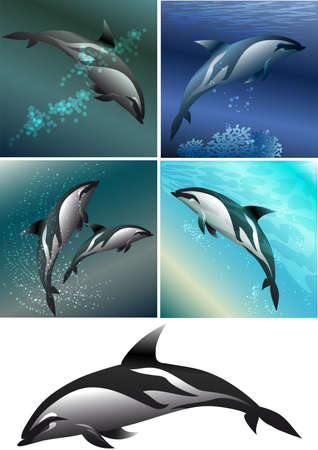 Set of dolfins including five images -  isolated dolphin in black and white and dolphins against different colour sea background Illustration