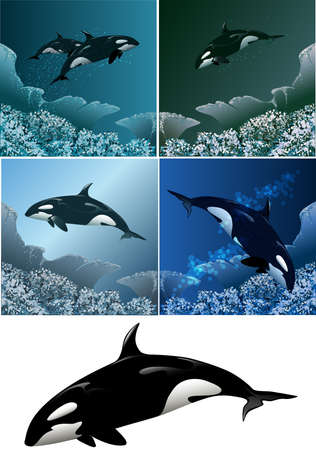 Set of killer whales including five images - isolated killer whale in black and white and killer whales against different colour sea background
