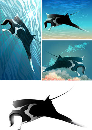 manta: Set of manta ray including four images - isolated manta ray in black and white and three mantas against different colour sea background