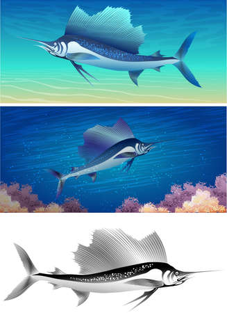 Set of sailfishes including three images - isolated sailfish in black and white and two sailfishes against different colour sea background Illustration