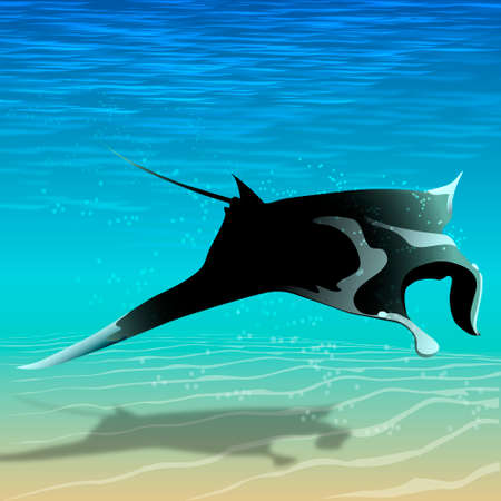 Manta ray flying over the seabed