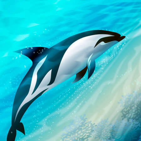 dolphin floating against different color sea  Stock Photo