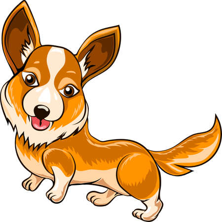 welsh: Funny illustration with Welsh corgi dog drawn in cartoon style