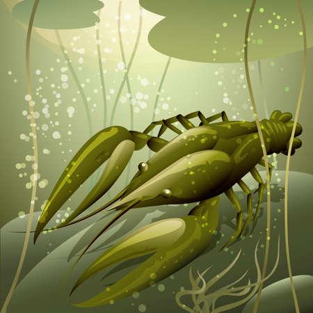 water lilies: Ilustraci�n con cangrejos de r�o contra nen�fares en el agua fresca dibujado en estilo de dibujos animados Vectores