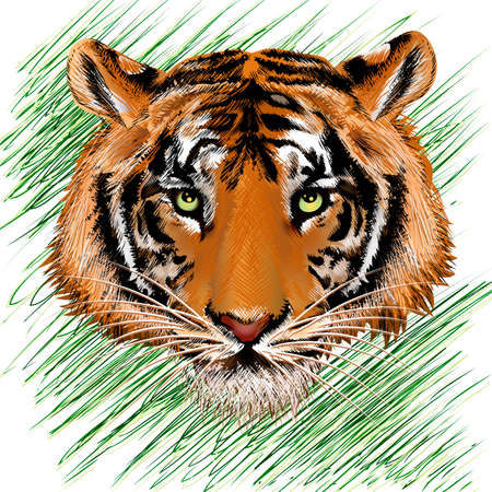 illustration with tiger head against abstract grass background drawn in pencil sketch style Illustration