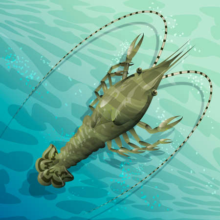 Illustration with langouste in the shoal waters drawn in cartoon style