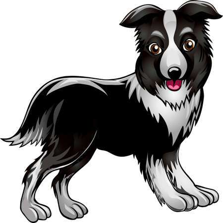 Funny illustration with collie drawn in cartoon style Vector