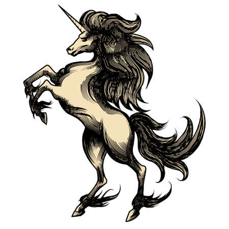 Illustration of unicorn drawn in engraving style isolated on white