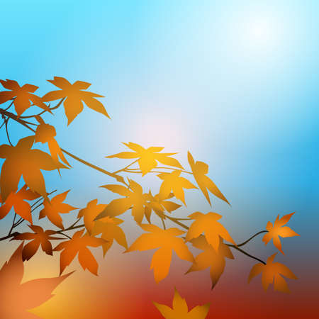 Maple leaves on the branches in the autumn forest. Autumn concept background.