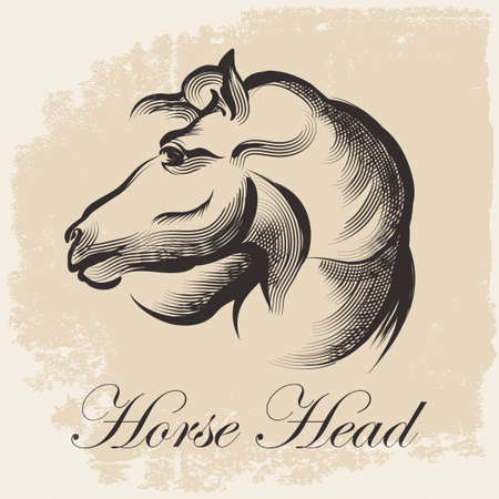 Sketch of Horse Head drawing in retro ink style