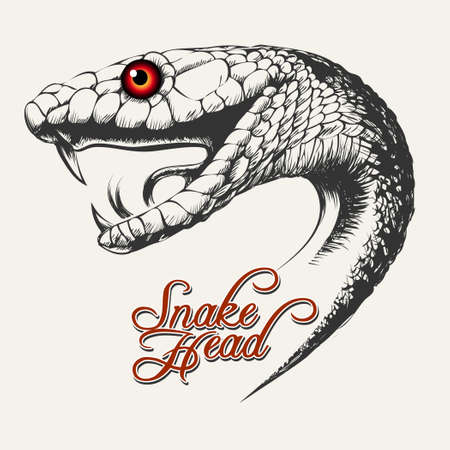 Schlangen-Kopf-Illustration Standard-Bild - 73640983