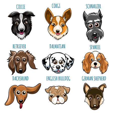 Set of Various Dog Head. Spaniel, bulldog, retriever, dalmatian and other breed. Vector illustartion isolated on white. Illustration